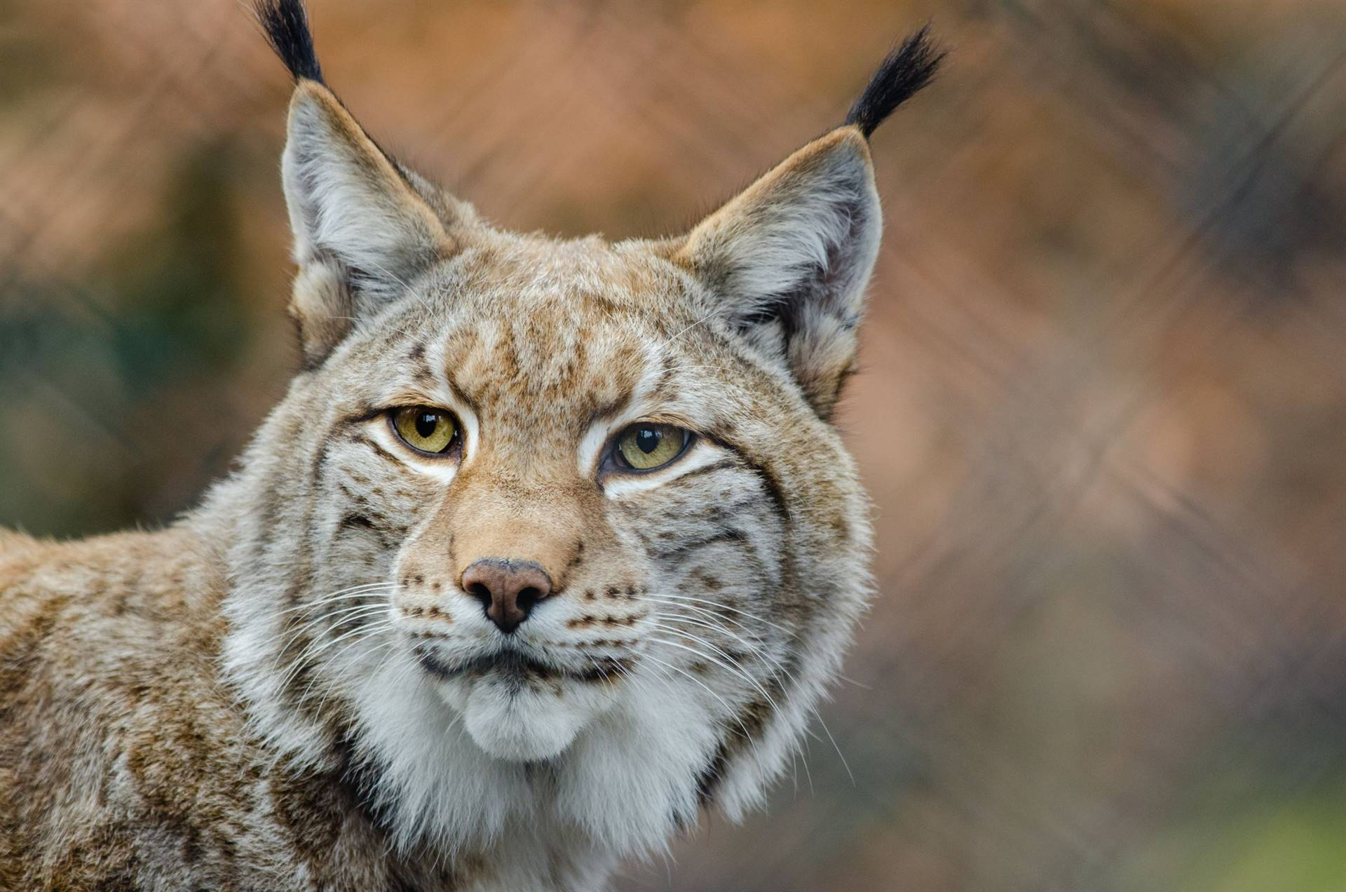 LMS Lynx Logo Coming Soon!